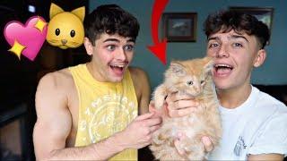 Surprising My Boyfriend With Kittens