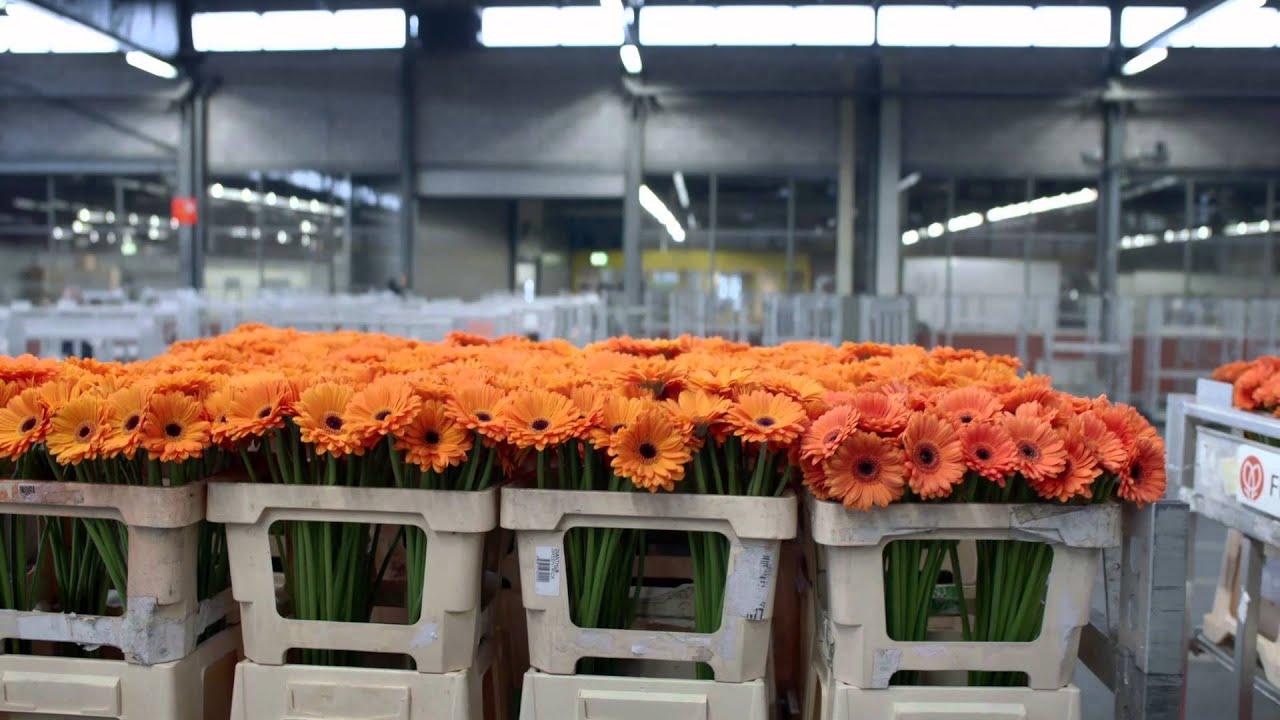 Comment Conserver Du Muguet En Vase le pouvoir des fleurs: avril 2013