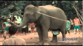 Elephants Delivery live video in Dinamalar Video Nettile Suttathu