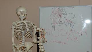 видео Ягодичная мышца. Анатомия и упражнения