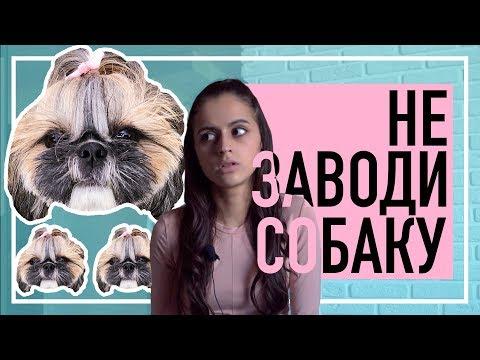 НИКОГДА НЕ ЗАВОДИ СОБАКУ   Что нужно знать перед покупкой щенка