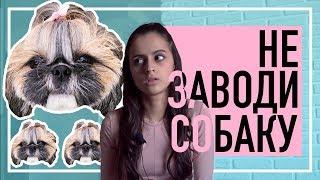 НИКОГДА НЕ ЗАВОДИ СОБАКУ | Что нужно знать перед покупкой щенка