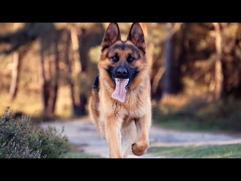 5 MOST DANGEROUS Dog Breeds In The World!