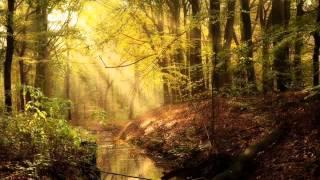 Enya - The Sun In The Stream -harmonica cover- por Julián Cordido