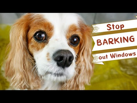 Stop Your Dog From Barking Out The Window