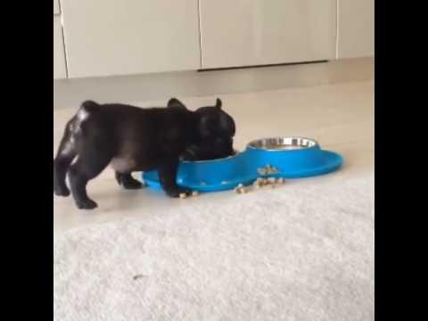 щенок ест на двух лапах