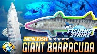 【釣魚大亨 Fishing Strike】 New fish Giant Barracuda Mozambique Channel