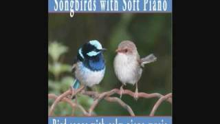 Songbirds with Soft Piano - Bird Songs with calm piano music