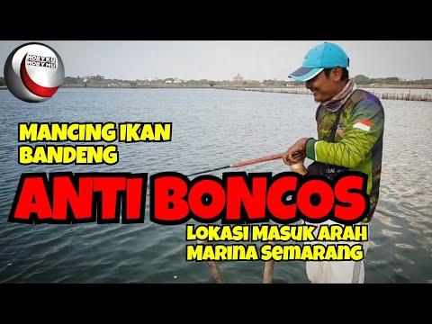 Bandeng presto oleh oleh andalan dari kota Semarang - BIS 08/07 from YouTube · Duration:  3 minutes 28 seconds