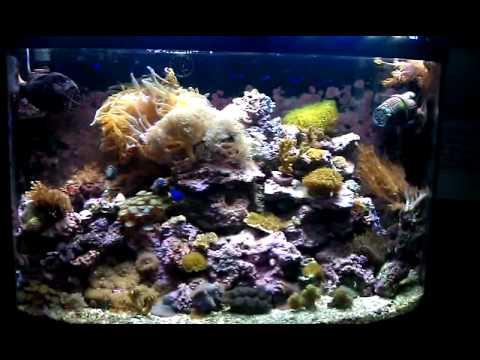 Beamswork Reef Led Update Doovi