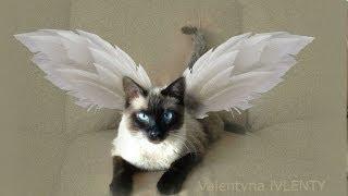 Сиамский кот в полете  =^..^= Siamese cat in flight  =^..^= СИАМСКИЕ КОШКИ