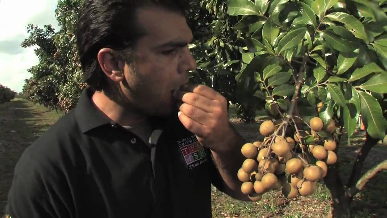 Tropical Fruit Growers Of South Florida