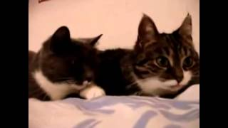 Смешные коты! Бывают и ГОВОРЯЩИЕ котики.
