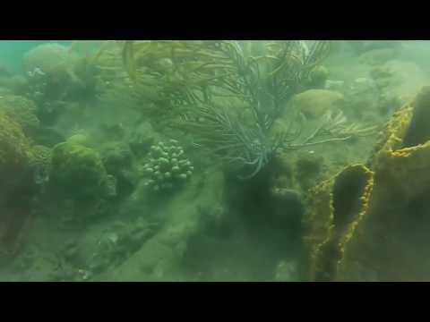 """SAINT ANNE"" Beach - ""MARTINIQUE"" ISLAND - APRIL 2016 - CORAL & FISHES - III"