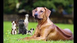 Ultimate FUNNY DOG Compilation of 2018 |  The dog is playing with his baby