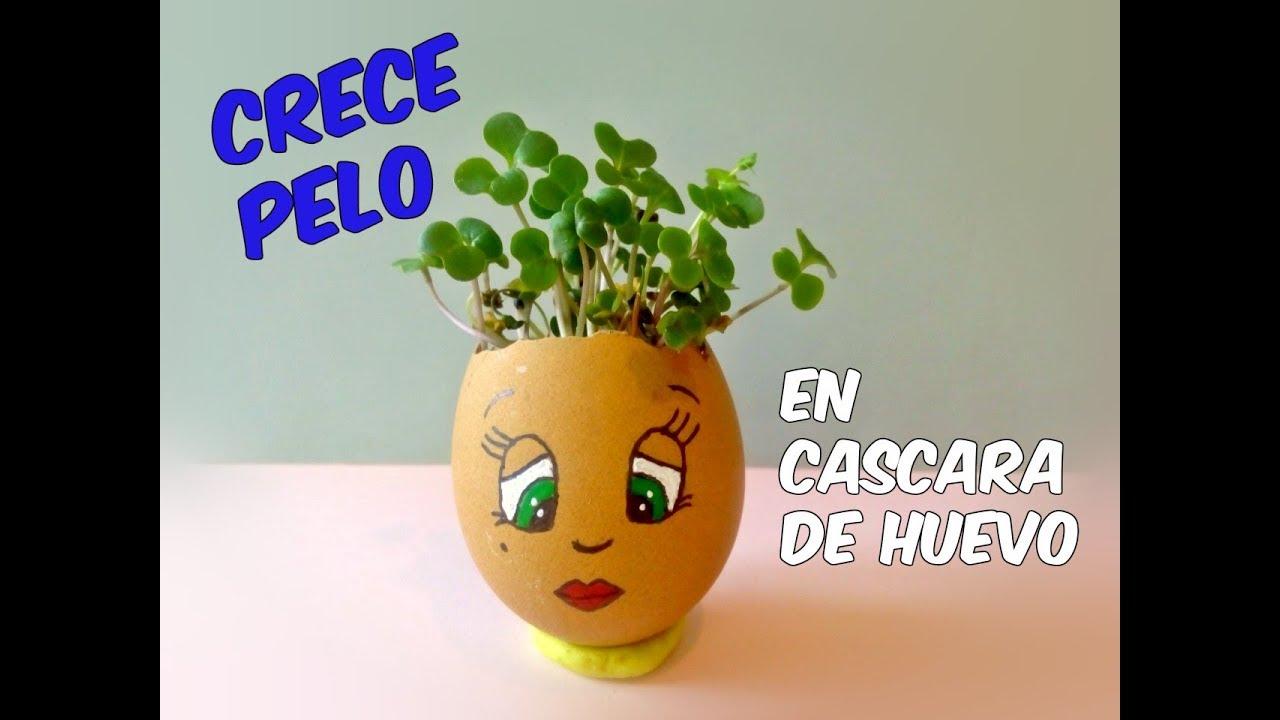 Reciclado Para Y Alpisteideas Muñeco Huevo Decorarirradia De Con Color Cascara vn0wPN8Omy