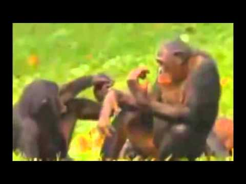 Hot animal mating crazy videos   funny video 2014 1