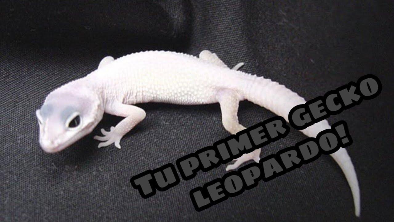 10 Tips, Consejos y Advertencias de tu primer Gecko Leopardo!