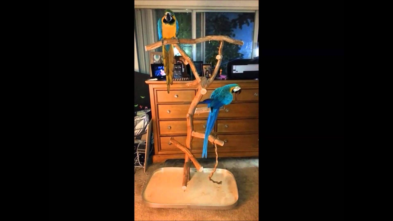 macaw perch stand