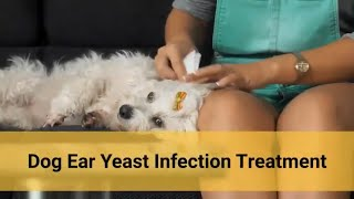 Dog Ear Yeast Infection Treatment 🐶