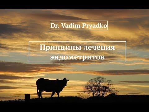 Принципы лечения эндометрита у коров.