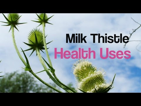how to make milk thistle tea from leaves