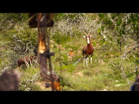 African Hunter EP4: The Beast and The Bow