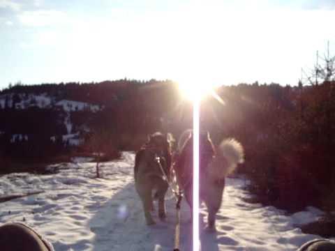 Dog sled ride, Transylvania
