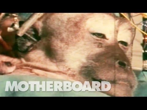 A Monkey Head Transplant (Part 2/2)