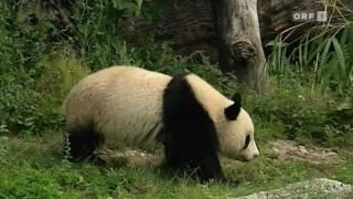 maschek - Die Abschiebung von Fu Long