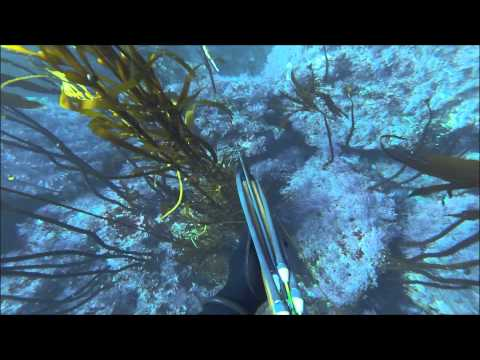 Big Sur Spearfishing