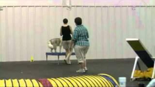 Siberian Husky Raiden Excellent Standard 8/22/10