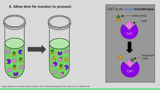 Figure 5.34 Using a CAT Reporter Gene