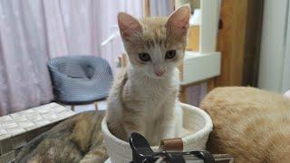 [고양이] 그리고 마늘까기 #9