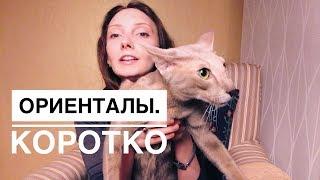 Ориентальная кошка. К чему готовиться. Дети и кошки. Очень активная/говорливая порода