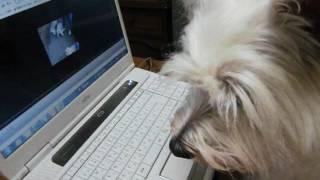 くるみはこの動画にすごく反応! http://meru103.exblog.jp/