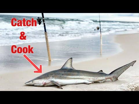 Blacktip Sharks All Over The Beach! Blacktip Catch & Cook Cajun Shark Strips!