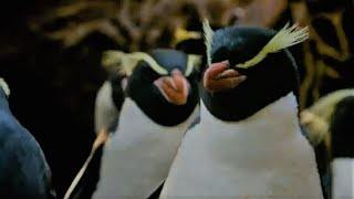 Penguins Of The Forest |  Meet The Family | BBC Earth