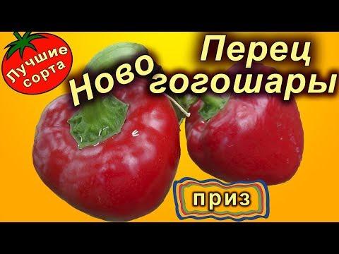 Сладкий перец Ново гогошары (ратунда, лучшие сорта сладкого перца) | новогогошары | гогошары | ратунды | ратунда | оленька | колобок | сорта | перец | игрок | пе