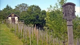 Württem. Weinwanderweg: Etappe 2: von Creglingen nach Weikersheim