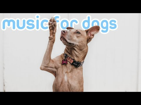 4 HOURS of Soothing Anti-Anxiety Music for Dogs! NEW 2019!