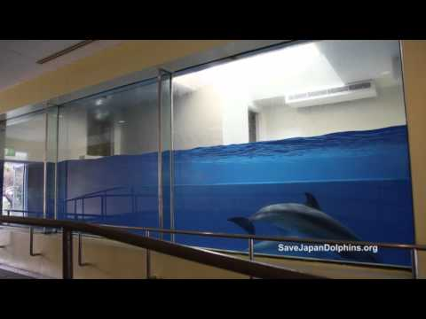 Small Dolphin Tank Quot The Fish Bowl Quot At Taiji Whale Musuem