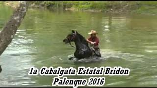 Primera Cabalgata Estatal Bridon Palenque 2016