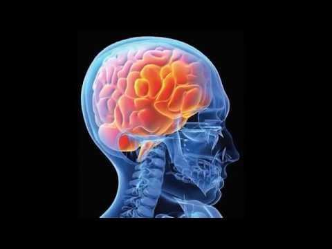 Мозг, Человек, Вселенная