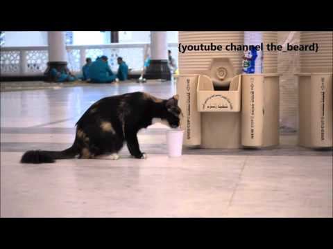 Cat drinking ZamZam water in masjid al Haram thumbnail