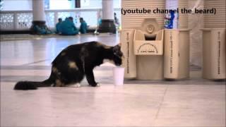 Cat drinking ZamZam water in masjid al Haram