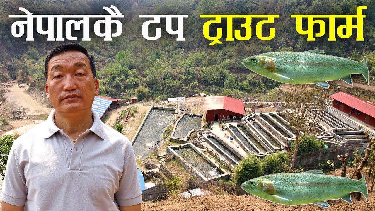 ट्राउट माछा पालनमा 100% सफल बनेका तुल कुमार राई - Rainbow trout fish farming in Nepal