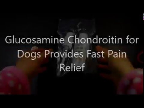 glucosamine-chondroitin-msm-for-dogs-provides-fast-pain-relief