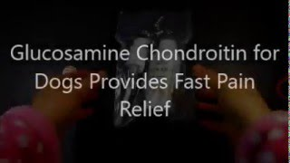 Glucosamine Chondroitin MSM for Dogs Provides Fast Pain Relief