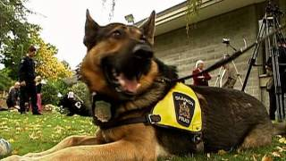 Saanich Police Dogs Get Their Badge - Shaw TV Victoria